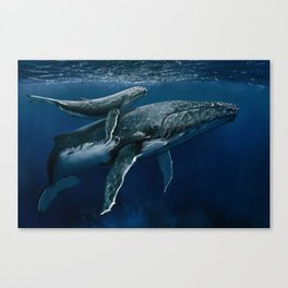 Humpback Whale Mother & Calf Canvas Print