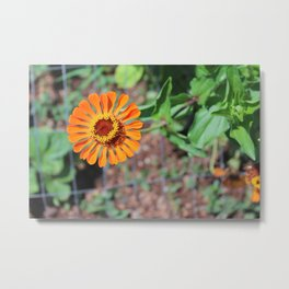 Flower No 5 Metal Print