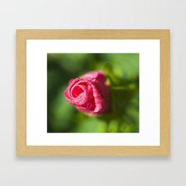 Cheddar Pink Dianthus Framed Art Print