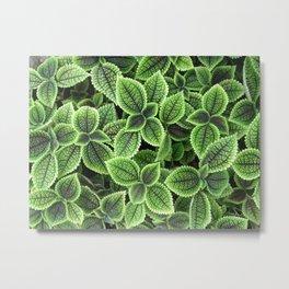 Beautifully textured green leaves Metal Print