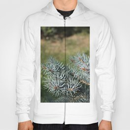 Picea pungens Blue Branches Hoody