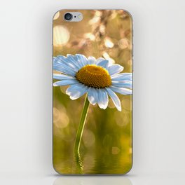 Floral Daisy Flower Flowers in a meadow after rain iPhone Skin
