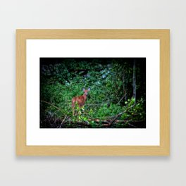 Backyard Bambi Framed Art Print
