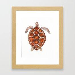 Turtle,Shell, Tortoise, Sealife, Lover, Animal Love, Brown Turtle, Wildlife, Turtle Lover, Turtles Framed Art Print