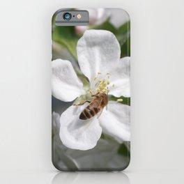 Bee on Mau ApleTree iPhone Case