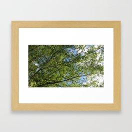 tree and sky Framed Art Print