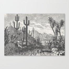 Cactus in Mountain Canvas Print