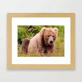 Brown Bear Kodiak Framed Art Print