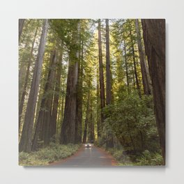 Humboldt Redwoods, Avenue of the Giants, California Photography, Giant Sequoia Trees, Nature, Landscape Art Metal Print