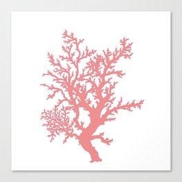 Coral Study Canvas Print