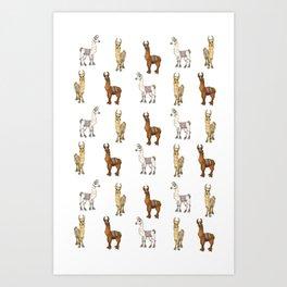 Llama-Rama Clear! Art Print