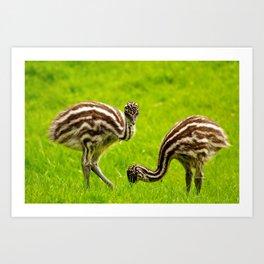 Baby Emus Art Print