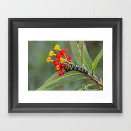 Monarch & Milkweed Framed Art Print