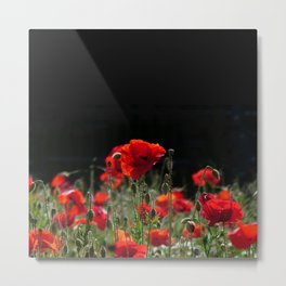 Red Poppies in bright sunlight Metal Print