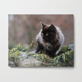 Alert Kitten Metal Print