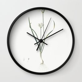 Long-tubed painted lady  from Les liliacees (1805) by Pierre Joseph Redoute (1759-1840) Wall Clock