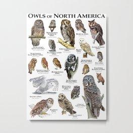 Owls of North America Metal Print