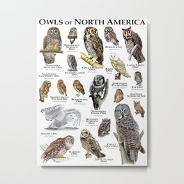 Owls of North America Metal Print