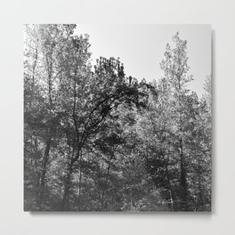 trees and sun, black and white Metal Print