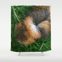 guinea pig Shower Curtains featuring American Crested Guinea Pig by Emily Hunter-Higgins