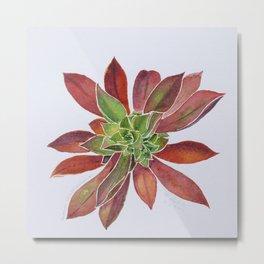 lovely Succulent Plants No.9 Metal Print