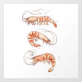 Shrimps 2014 Art Print