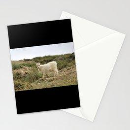 rare pashmina Stationery Cards