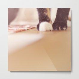 paws Metal Print