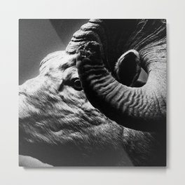 Tom Feiler Black and White Ram Metal Print