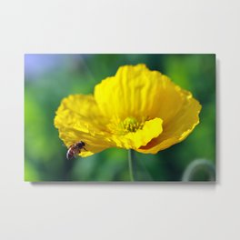 Yellow Poppy in February 2 Metal Print