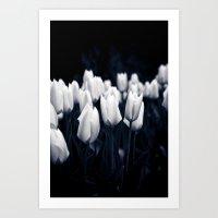 White Tulips In Cool Light Art Print