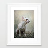 french bulldog Framed Art Prints featuring French bulldog  by Pauline Fowler ( Polly470 )