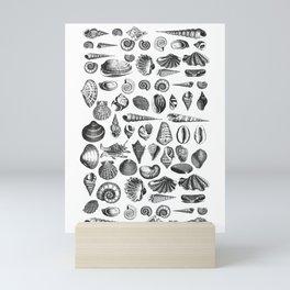 Vintage Sea Shell Drawing Black And White Mini Art Print