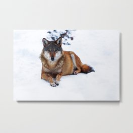 Lonely guardian Metal Print