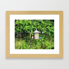 Red-Breasted Grosbeak & Indigo Bunting at Feeder Framed Art Print