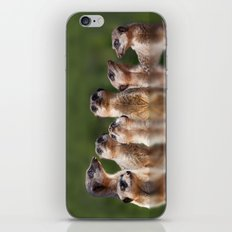 Meerkat Mob iPhone & iPod Skin