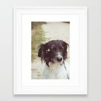border collie Framed Art Prints featuring Border Collie by Laura Baay