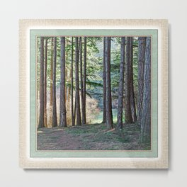 MEADOW LIGHT ON THE FOREST EDGE Metal Print