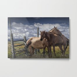 Western Horses in the Pasture by a Wooden Fence Metal Print