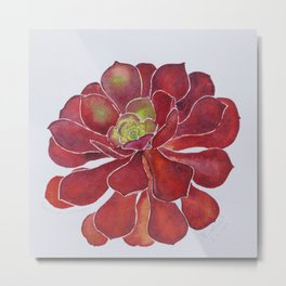 lovely Succulent Plants No.15 Metal Print