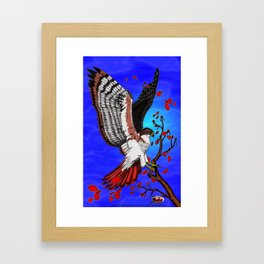 """Tristan's Redtailed hawk"" Framed Art Print"