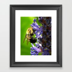 Bee all you can Bee Framed Art Print