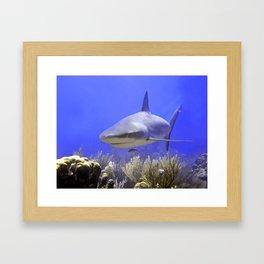 Shark Swimming Into Shot Framed Art Print