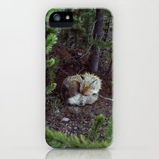 Sleeping Fox Slim Case iPhone SE