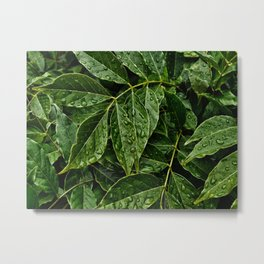 Layers Of Wet Green Leaves Water Droplets On Plant Leaves Metal Print