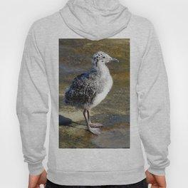 Ring-billed Gull Chick Hoody