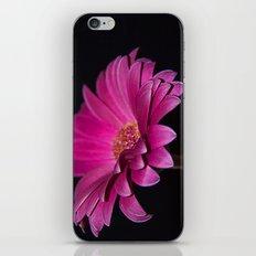 Pink Gerbera iPhone & iPod Skin