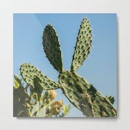 Cactus needle Metal Print