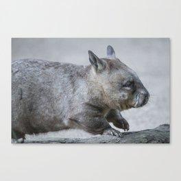 Australian Wombat Canvas Print