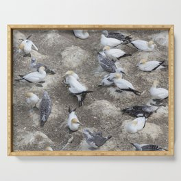 Gannet Colony Serving Tray